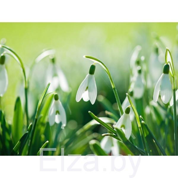 """Отдушка """"Весна"""", 10 мл, Латвия"""